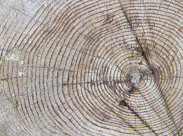 Tree_rings_-_geograph.org.uk_-_738518